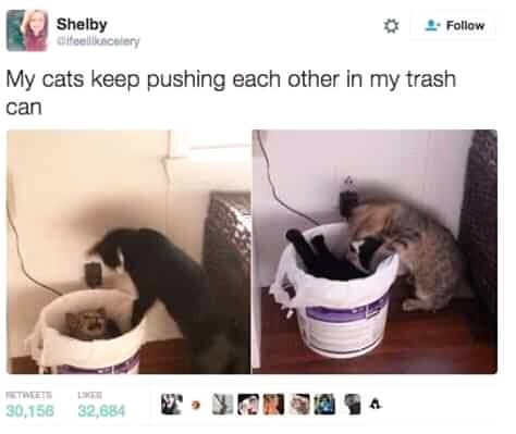 Cat - Shelby Gitelikacelery 2- Follow My cats keep pushing each other in my trash can TWEETS LIKE 30,156 32,684
