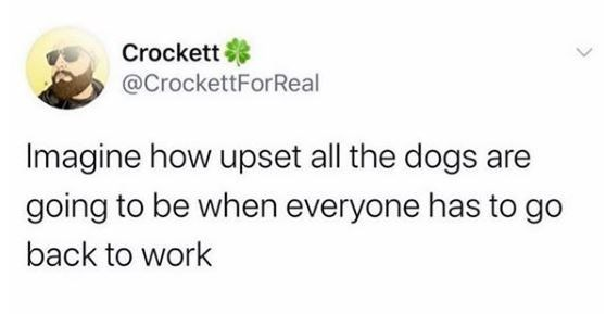 Text - Crockett @CrockettForReal Imagine how upset all the dogs are going to be when everyone has to go back to work