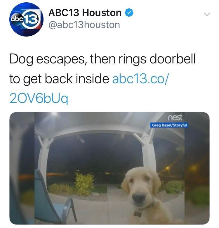 Transport - ABC13 Houston abc13 @abc13houston Dog escapes, then rings doorbell to get back inside abc13.co/ 20V6bUq nest Greg Basel/Storyful