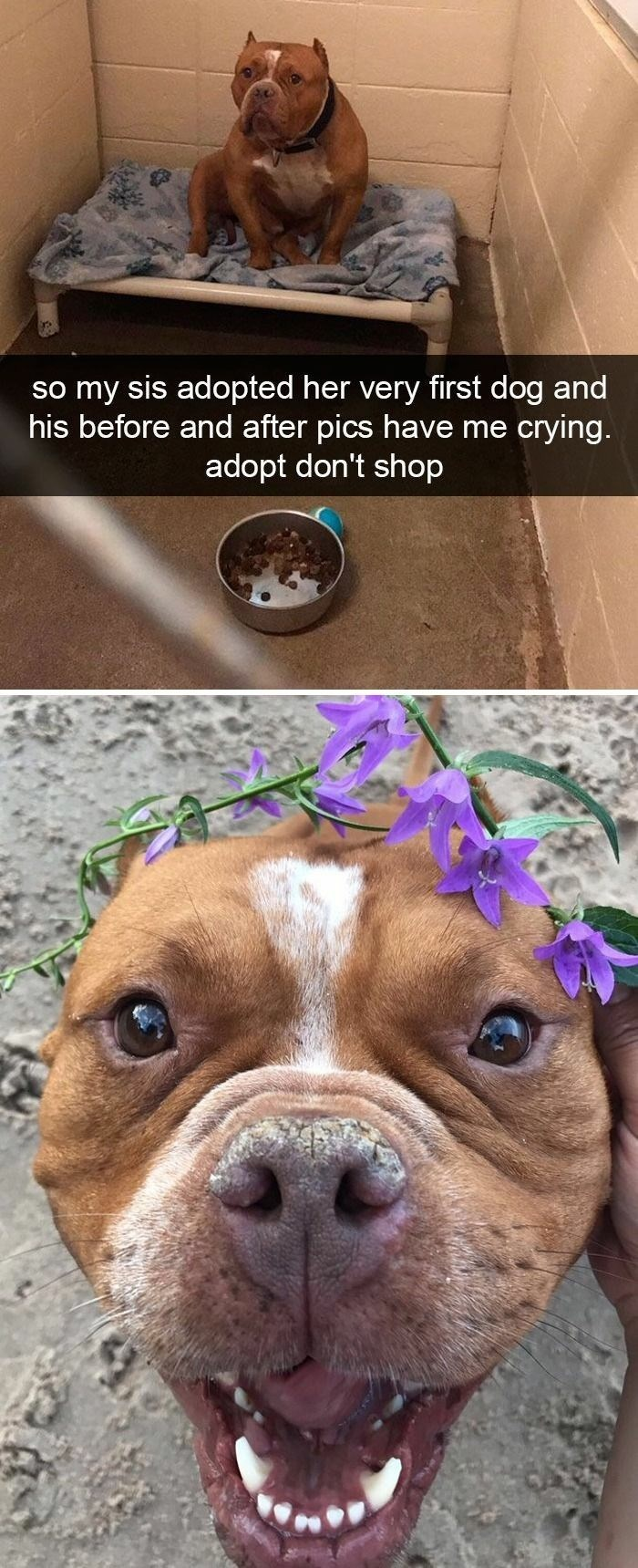 Dog - so my sis adopted her very first dog and his before and after pics have me crying. adopt don't shop