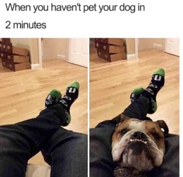 Dog breed - When you haven't pet your dog in 2 minutes