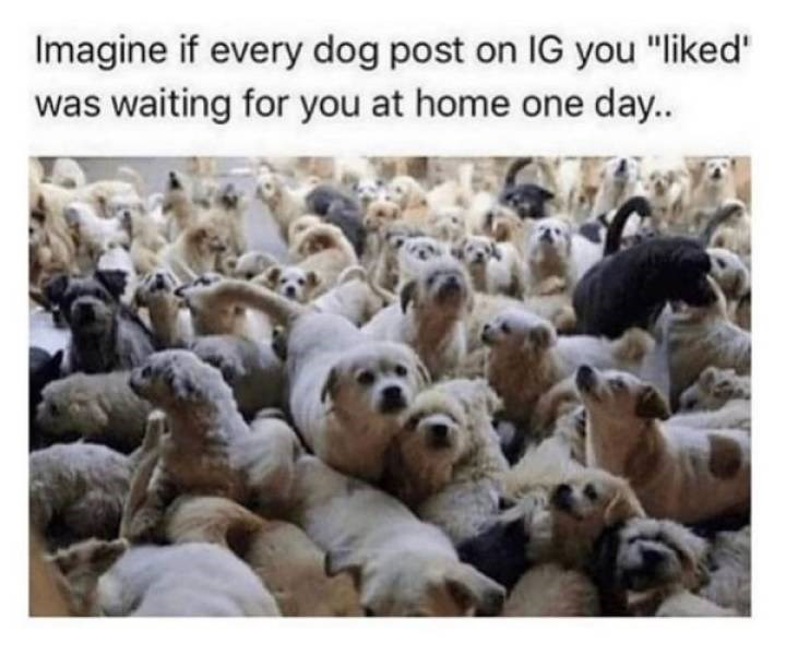 """Herd - Imagine if every dog post on IG you """"liked"""" was waiting for you at home one day.."""