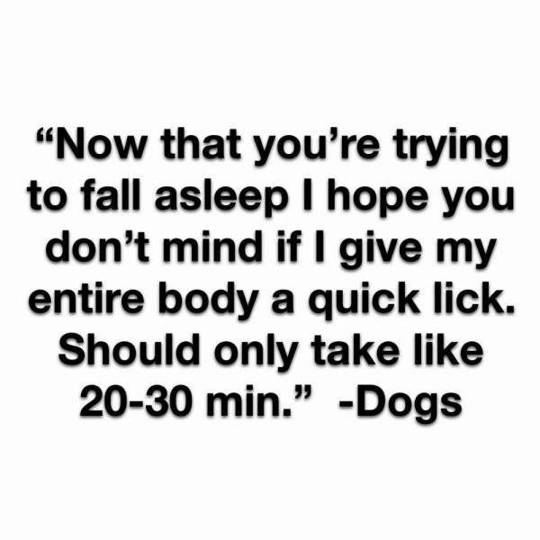"""Text - """"Now that you're trying to fall asleep I hope you don't mind if I give my entire body a quick lick. Should only take like 20-30 min."""" -Dogs"""