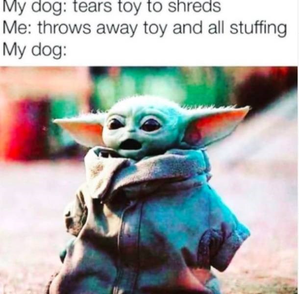 Yoda - My dog: tears toy to shreds Me: throws away toy and all stuffing My dog: