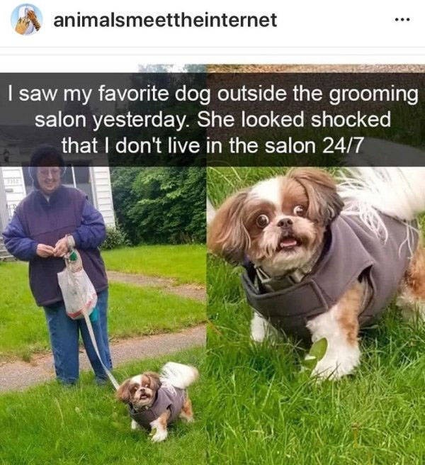 Dog - animalsmeettheinternet I saw my favorite dog outside the grooming salon yesterday. She looked shocked that I don't live in the salon 24/7