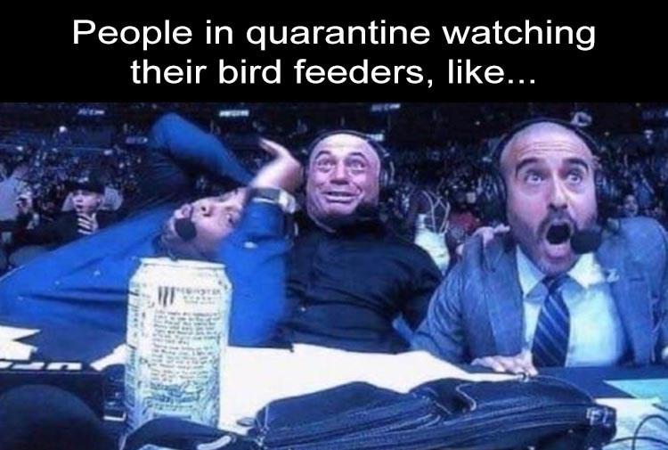 Joe Rogan, Daniel Cormier and Jon Anik UFC #248 Reaction People in quarantine watching their bird feeders, like...