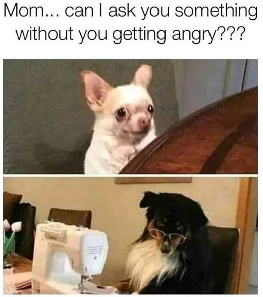 Dog breed - Mom... can I ask you something without you getting angry???