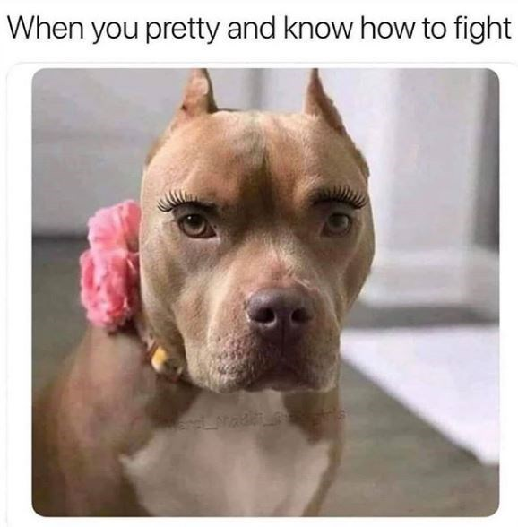 Dog - When you pretty and know how to fight