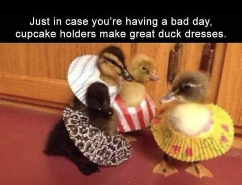 Duck - Just in case you're having a bad day, cupcake holders make great duck dresses.