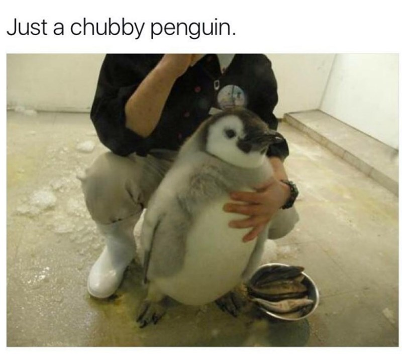 Photo caption - Just a chubby penguin.