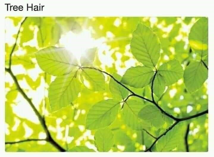 Leaf - Tree Hair