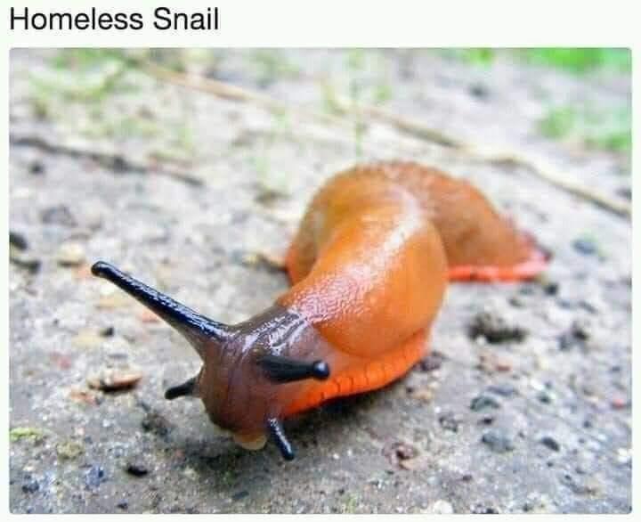 Slug - Homeless Snail