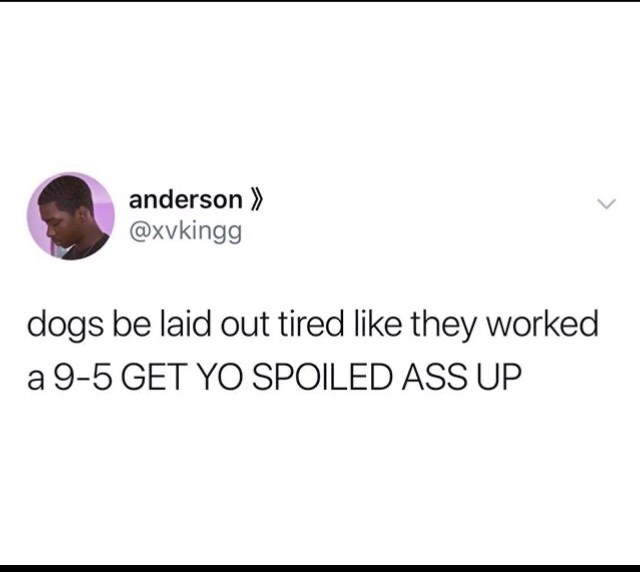 Text - anderson >> @xvkingg dogs be laid out tired like they worked a 9-5 GET YO SPOILED ASS UP