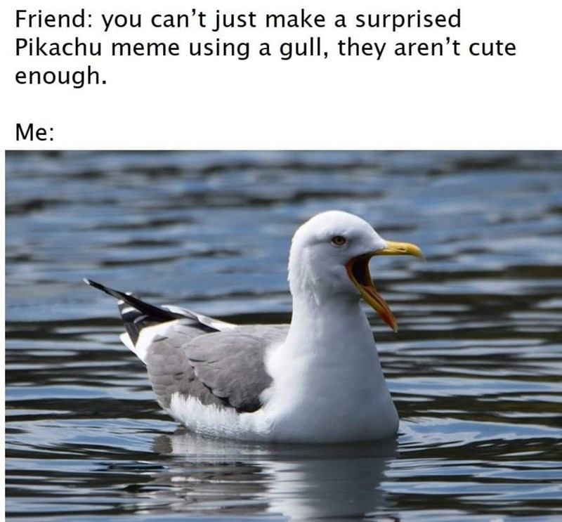 Funny random memes - Bird - Friend: you can't just make a surprised Pikachu meme using a gull, they aren't cute enough. Me:
