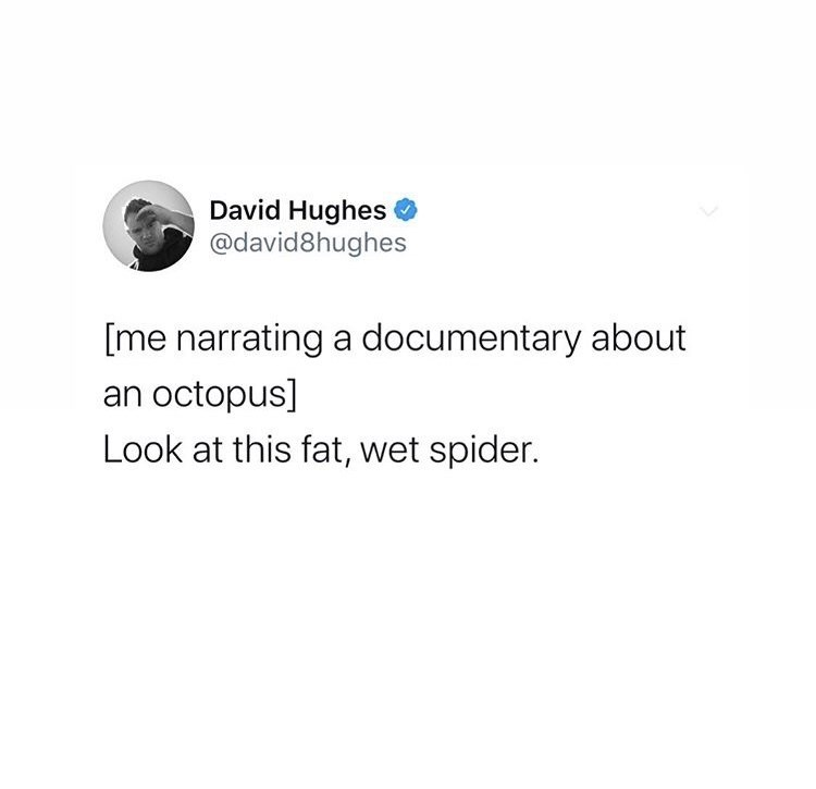 Text - David Hughes @david8hughes [me narrating a documentary about an octopus] Look at this fat, wet spider.