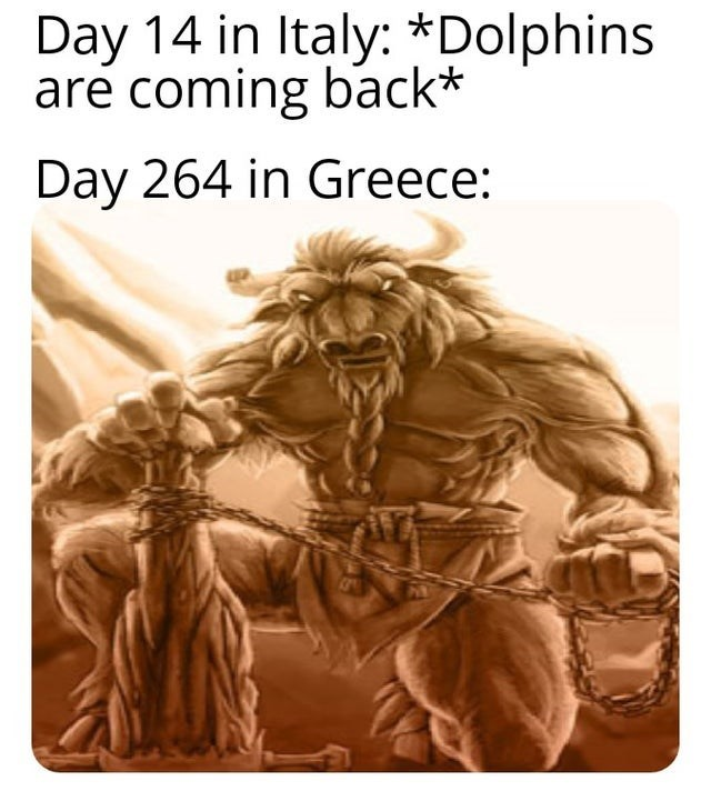 Text - Day 14 in Italy: *Dolphins are coming back* Day 264 in Greece: