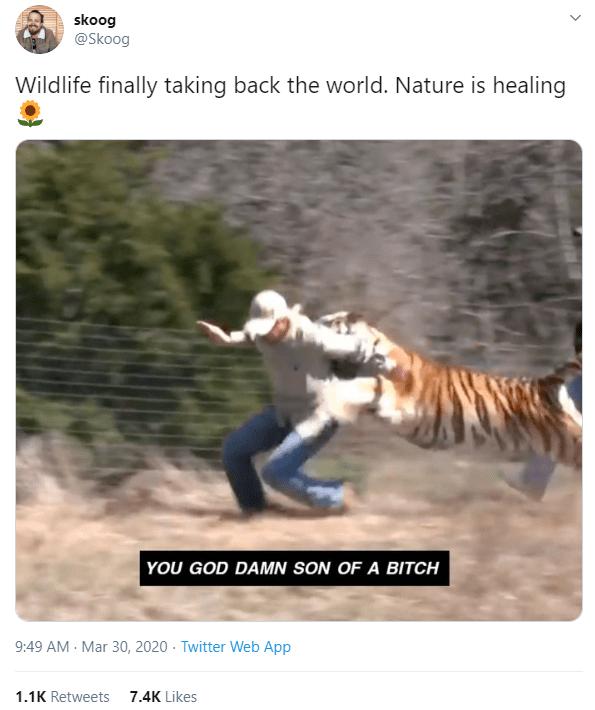 Bengal tiger - skoog @Skoog Wildlife finally taking back the world. Nature is healing YOU GOD DAMN SON OF A BITCH 9:49 AM - Mar 30, 2020 · Twitter Web App 1.1K Retweets 7.4K Likes