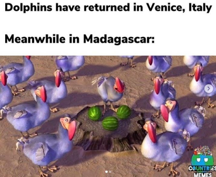 Adaptation - Dolphins have returned in Venice, Italy Meanwhile in Madagascar: COUNTRIES MEMES