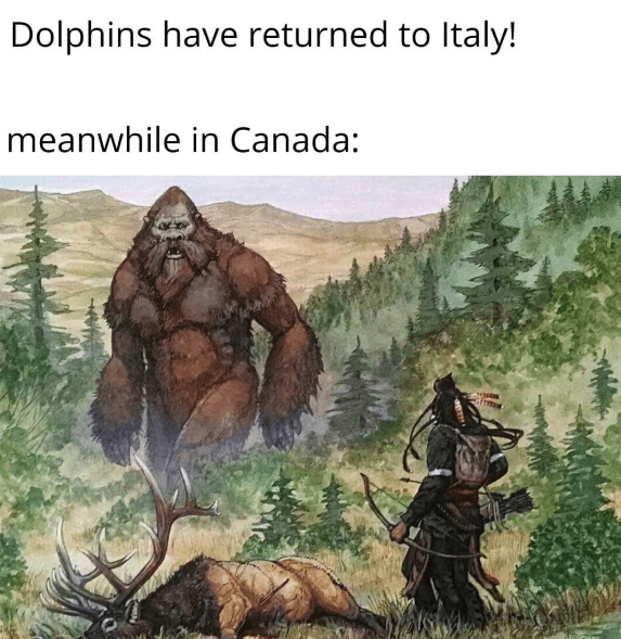Mythology - Dolphins have returned to Italy! meanwhile in Canada: