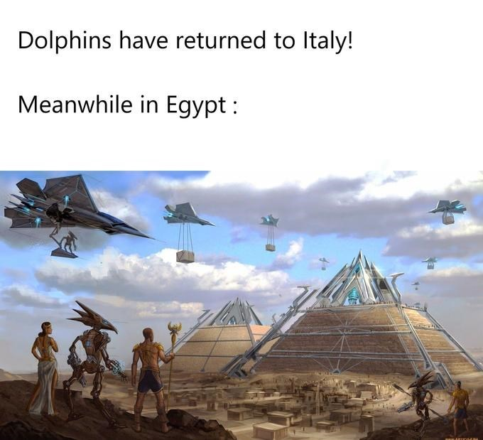 Airplane - Dolphins have returned to Italy! Meanwhile in Egypt :