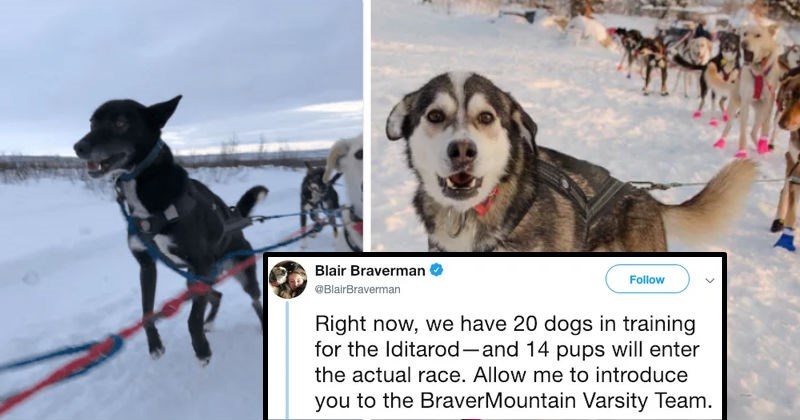 Twitter user introduces the very special dogs in training for the Iditarod.