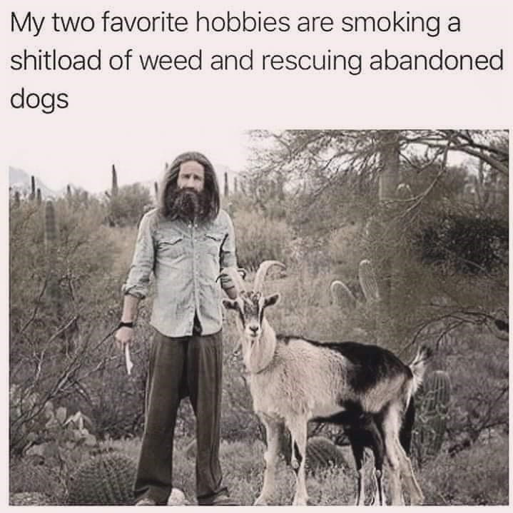 Goats - My two favorite hobbies are smoking a shitload of weed and rescuing abandoned dogs