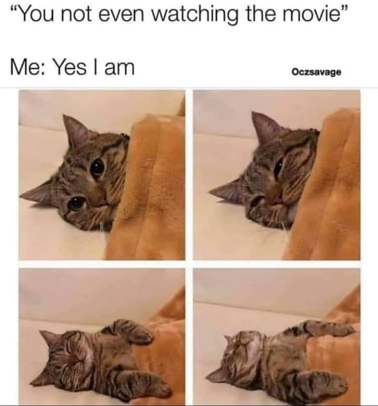 """Cat - """"You not even watching the movie"""" Me: Yes I am Oczsavage"""