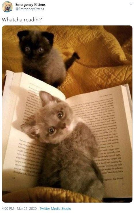 Cat - Emergency Kittens @EmrgencyKittens Whatcha readin'? he 4:00 PM · Mar 21, 2020 · Twitter Media Studio