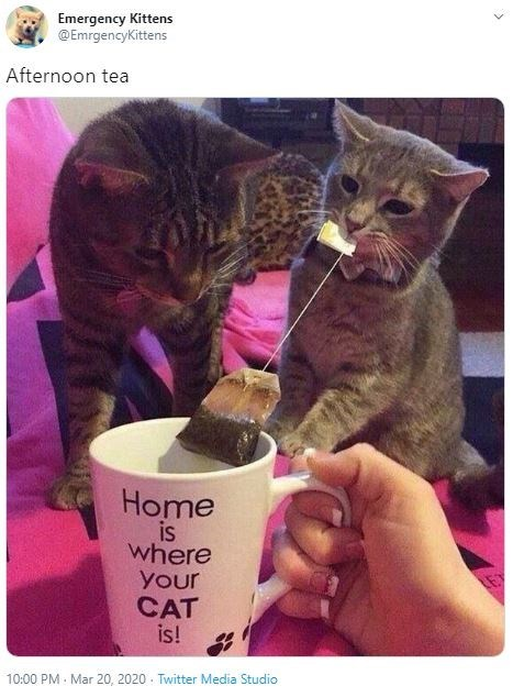 Cat - Emergency Kittens @EmrgencyKittens Afternoon tea Home is where your CAT is! 10:00 PM - Mar 20, 2020 - Twitter Media Studio
