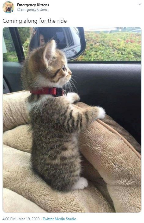 Cat - Emergency Kittens @EmrgencyKittens Coming along for the ride 4:00 PM - Mar 19, 2020 - Twitter Media Studio