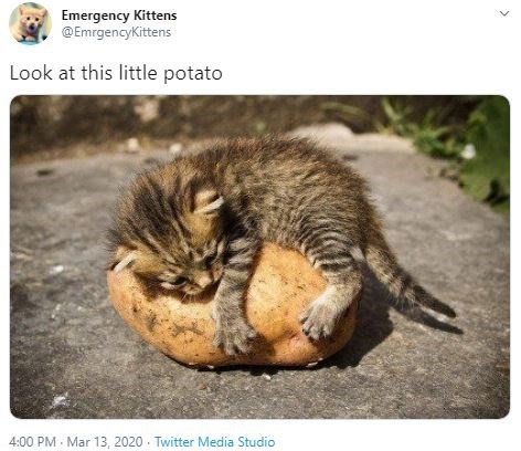 Wildlife - Emergency Kittens @EmrgencyKittens Look at this little potato 4:00 PM - Mar 13 , 2020 . Twitter Media Studio