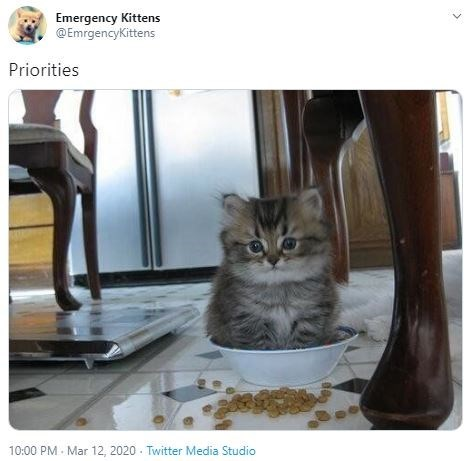 Cat - Emergency Kittens @EmrgencyKittens Priorities 10:00 PM - Mar 12, 2020 - Twitter Media Studio