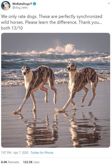 Vertebrate - WeRateDogs® @dog_rates We only rate dogs. These are perfectly synchronized wild horses. Please learn the difference. Thank you.. both 13/10 7:07 PM - Apr 7, 2020 - Twitter for iPhone 8.4K Retweets 122.5K Likes