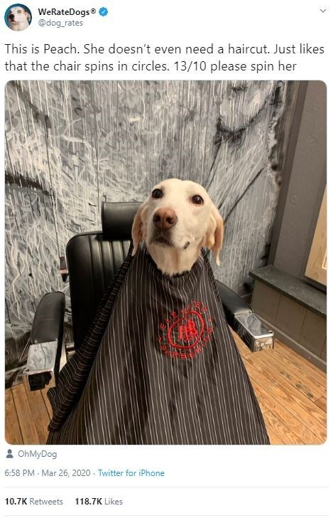 Dog - WeRateDogs® @dog_rates This is Peach. She doesn't even need a haircut. Just likes that the chair spins in circles. 13/10 please spin her 2 OhMyDog 6:58 PM Mar 26, 2020 - Twitter for iPhone 10.7K Retweets 118.7K Likes