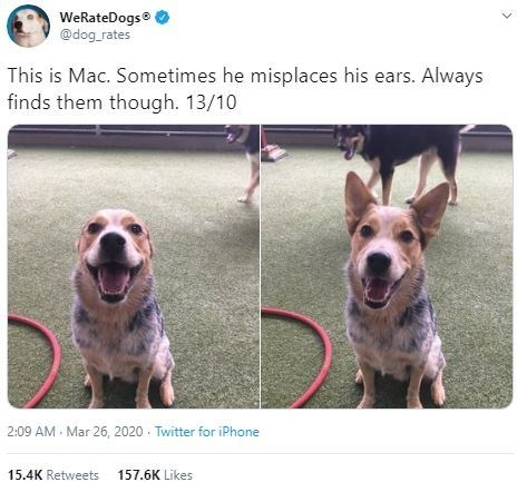 Dog - WeRateDogs @dog_rates This is Mac. Sometimes he misplaces his ears. Always finds them though. 13/10 2:09 AM - Mar 26, 2020 Twitter for iPhone 15.4K Retweets 157.6K Likes