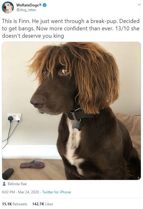 Dog - WeRateDogs @dog_rates This is Finn. He just went through a break-pup. Decided to get bangs. Now more confident than ever. 13/10 she doesn't deserve you king Belinda Rae 6:02 PM Mar 24, 2020 · Twitter for iPhone 15.1K Retweets 142.7K Likes