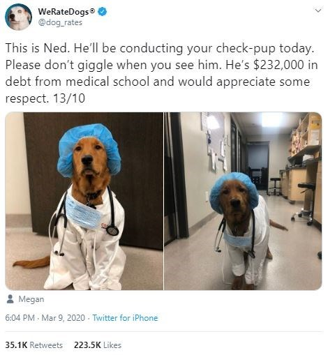 Canidae - WeRateDogs @dog_rates This is Ned. He'll be conducting your check-pup today. Please don't giggle when you see him. He's $232,000 in debt from medical school and would appreciate some respect. 13/10 2 Megan 6:04 PM - Mar 9, 2020 - Twitter for iPhone 35.1K Retweets 223.5K Likes