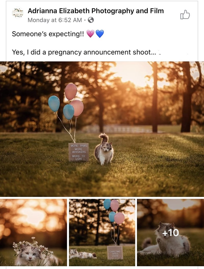 Text - Adrianna Elizabeth Photography and Film ে Monday at 6:52 AM · Someone's expecting!! Yes, I did a pregnancy announcement shoot... - MORE PAWS MORE WHISKERS MORE TO LOVE +10 EXPECTING APRIL 2020