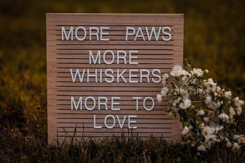 Text - MORE PAWS MORE WHISKERS MORE TO LOVE