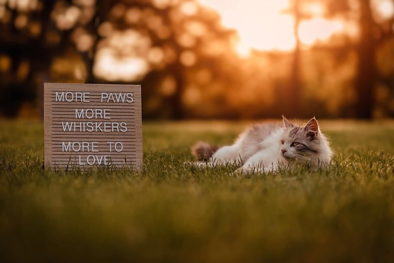 Grass - MORE PAWS MORE WHISKERS MORE TO FLOVE
