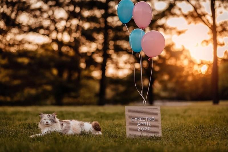 Balloon - EXPECTING APRIL 2020
