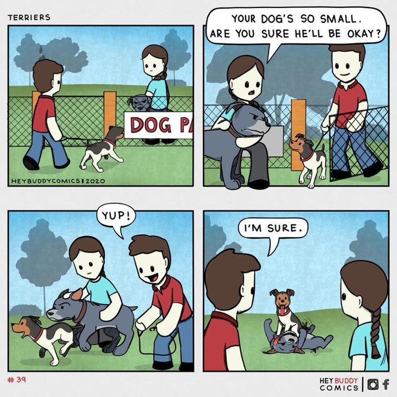 Cartoon - YOUR DOG'S SO SMALL. ARE YOU SURE HE'LL BE OKAY ? TERRIERS DOG P HEYBUDDYCOMICSI2020 YUP! I'M SURE. # 39 HEY BUDDY COMICS |Of