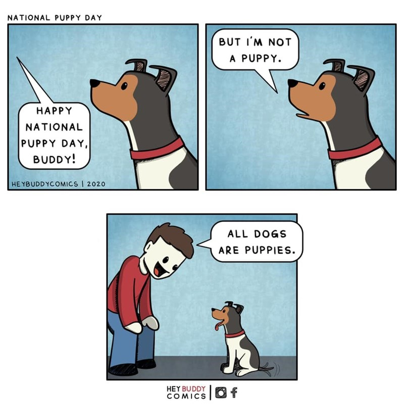 Cartoon - NATIONAL PUPPY DAY BUT I'M NOT A PUPPY. НАРPY NATIONAL PUPPY DAY, BUDDY! HE YBUDDYCOMICS 2020 ALL DOGS ARE PUPPIES. HEY BUDDY COMICSO f