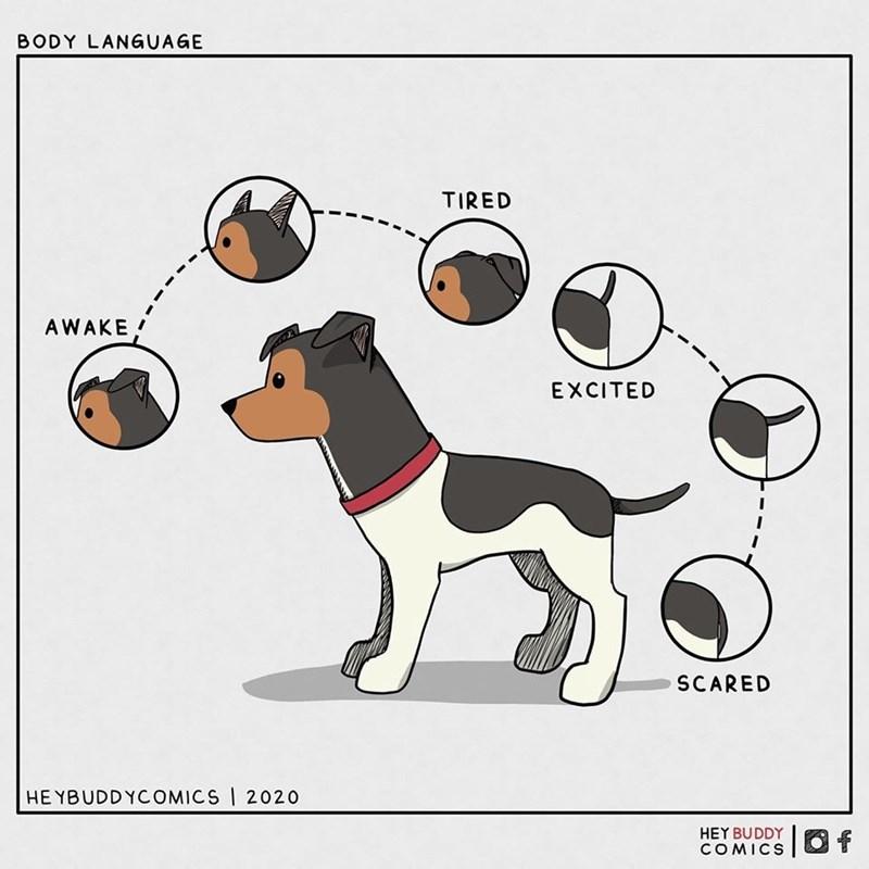 Dog - BODY LANGUAGE TIRED AWAKE ! EXCITED SCARED HE YBUDDYCOMICS I 2020 HEY BUDDY COMICS 1.