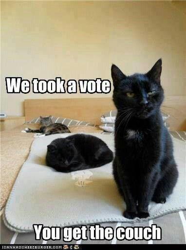 Black Cats Appreciation Pics And Vids 40 Cat Memes I Can Has Cheezburger
