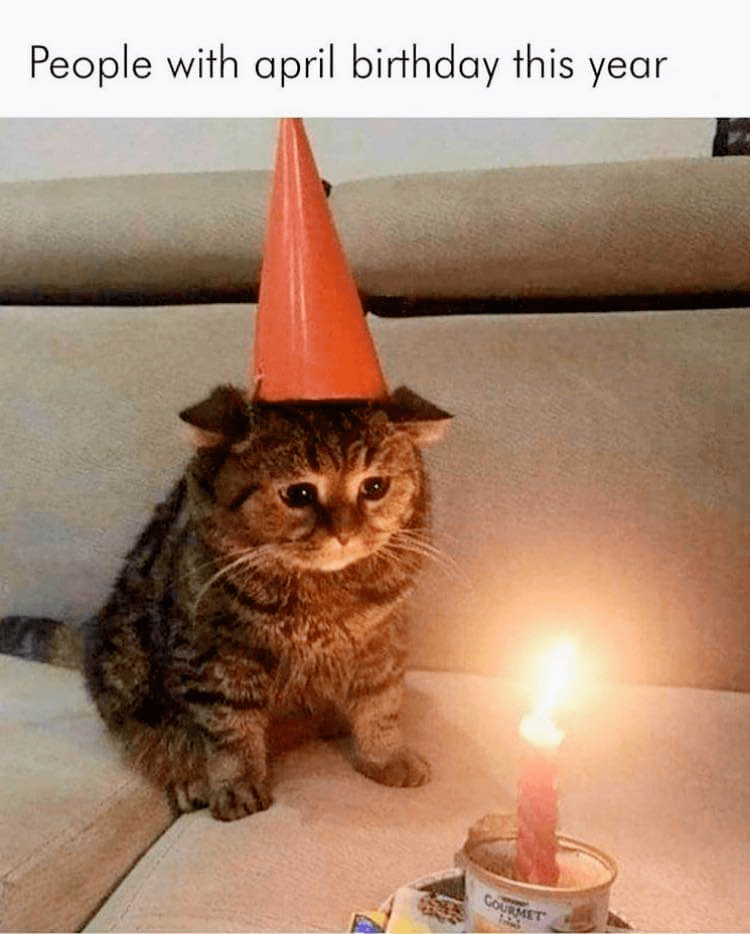 Cat - People with april birthday this year COURMET