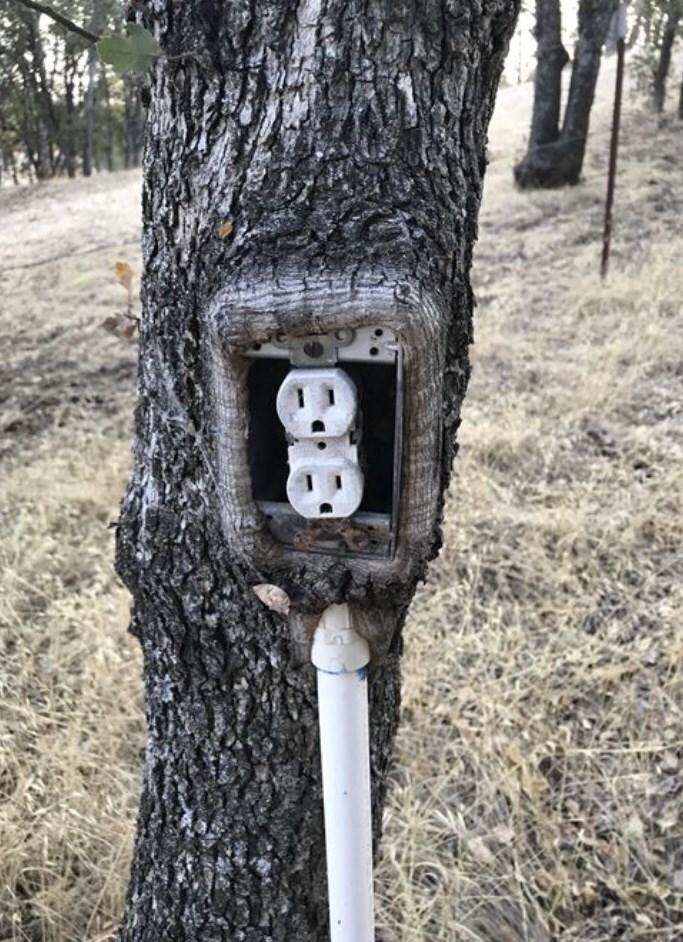 Tree - ев