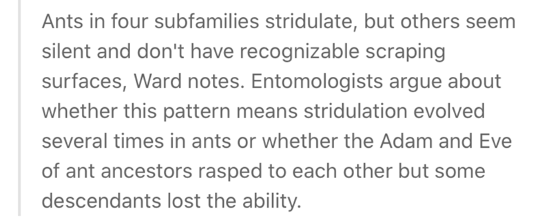 Text - Ants in four subfamilies stridulate, but others seem silent and don't have recognizable scraping surfaces, Ward notes. Entomologists argue about whether this pattern means stridulation evolved several times in ants or whether the Adam and Eve of ant ancestors rasped to each other but some descendants lost the ability.