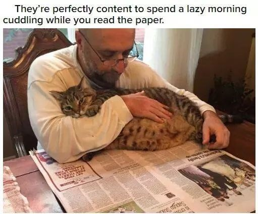Felidae - They're perfectly content to spend a lazy morning cuddling while you read the paper. Sapga Sta