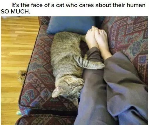 Photo caption - It's the face of a cat who cares about their human SO MUCH.